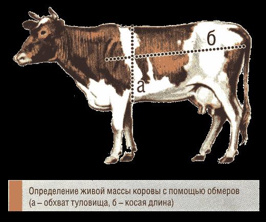 определение живой массы крупного рогатого скота по промерам