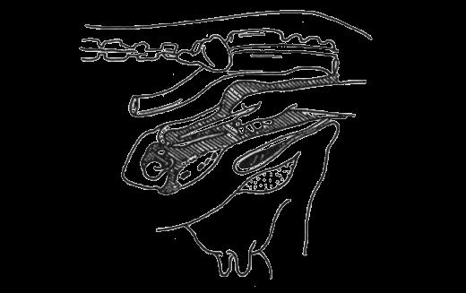 Инструкция По Искусственному Осеменению Коров - фото 11